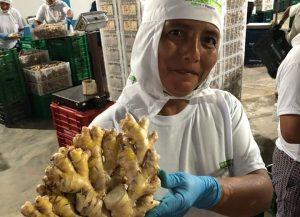 Ingwer aus Peru